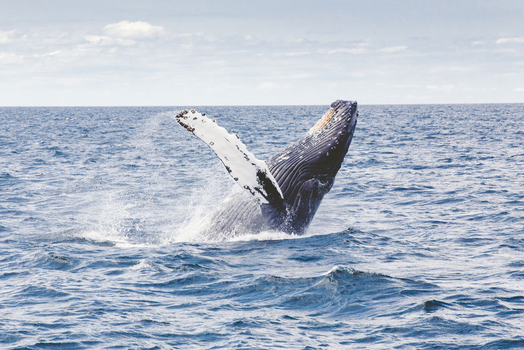 The Whale Route & Hermanus: